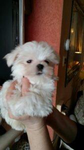 puppy Yara