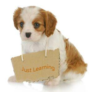 hond met just learning bordje