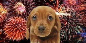 Vuurwerkangst bij hond