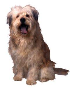 Hond commando zit