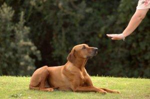 Hond commando af