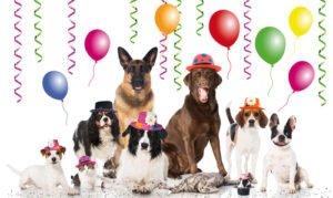 5 verjaardags cadeau tips voor jouw hond