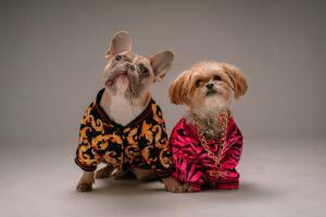 2 honden commando Zit