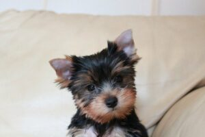 Puppy trainingswoord