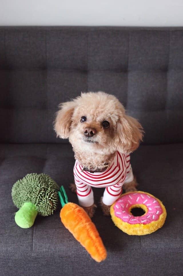 hond met groenten en donut knuffels