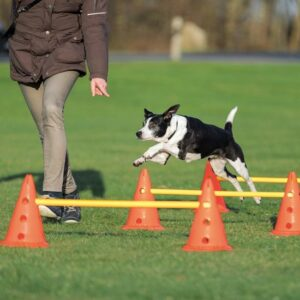 Agility training Hondenspelletjes