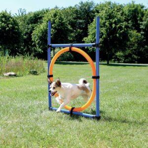Agility met hoepel, hondenspelletjes