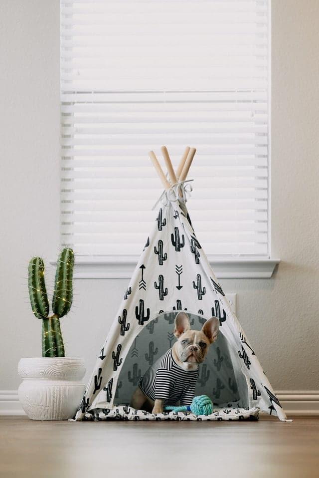 hondenmand of hondenkussen