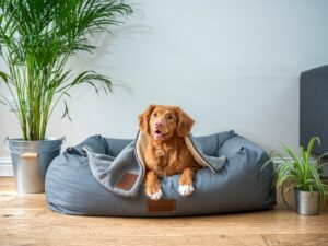 Hond in hondenmand