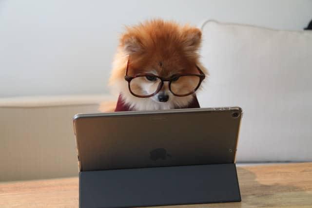 Online puppy cursus
