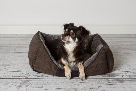 Scruffs Chester Hondenmand