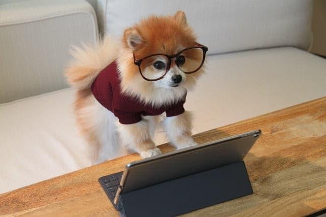 Hoe leert een hond