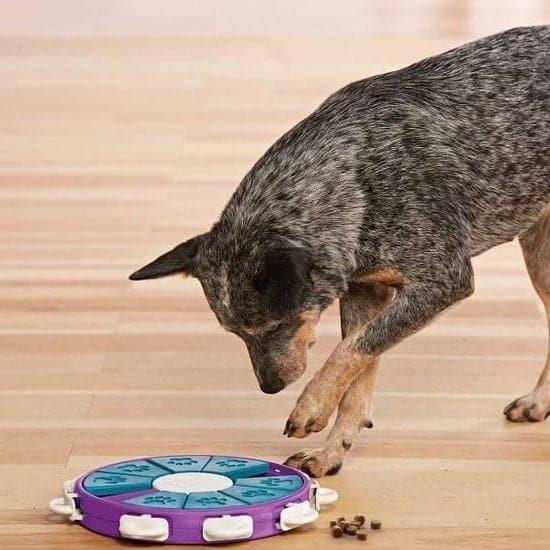 Hodnenspelletjes met hondenpuzzel