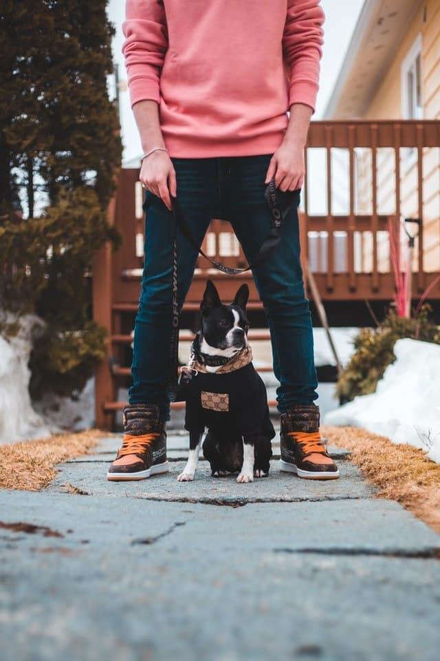 Ontspannen wandelen met je hond  aan de lijn