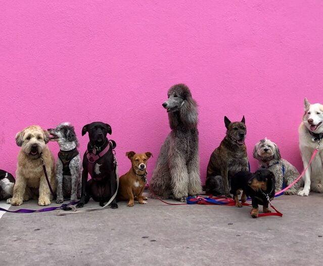11 leuke Hondenspelletjes die je binnen kan doen.