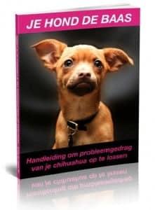 Chihuahua bonus boek 1