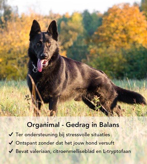 Gedrag in balans pillen ter ondersteuning voor bange honden