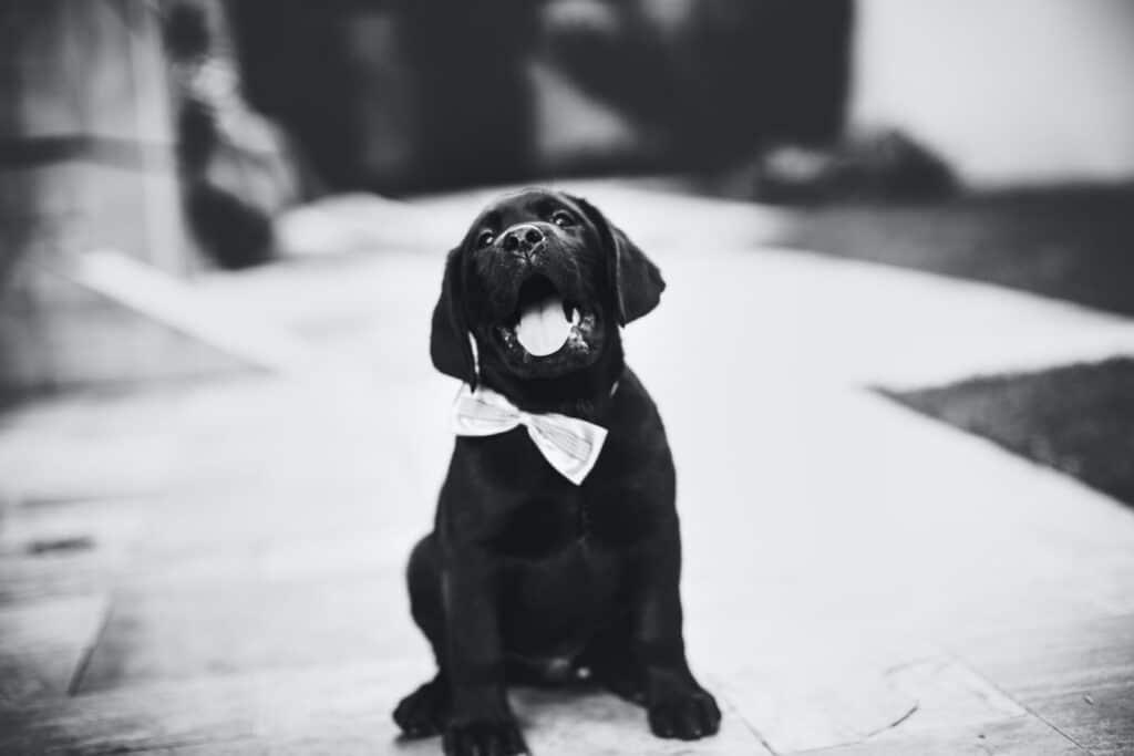 Honden veiligheidscommando's