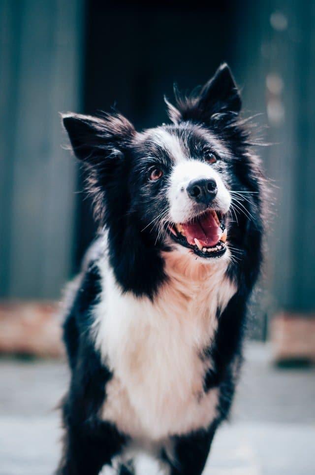 foto van happy hond