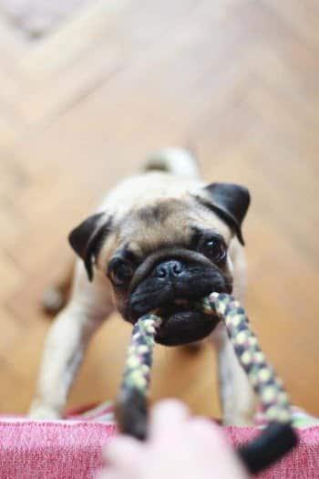 puppy spele apporteren