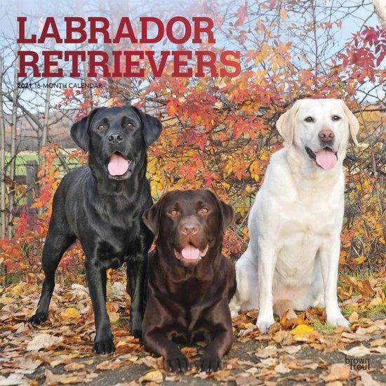 Labrador Retriever Kalender 2021