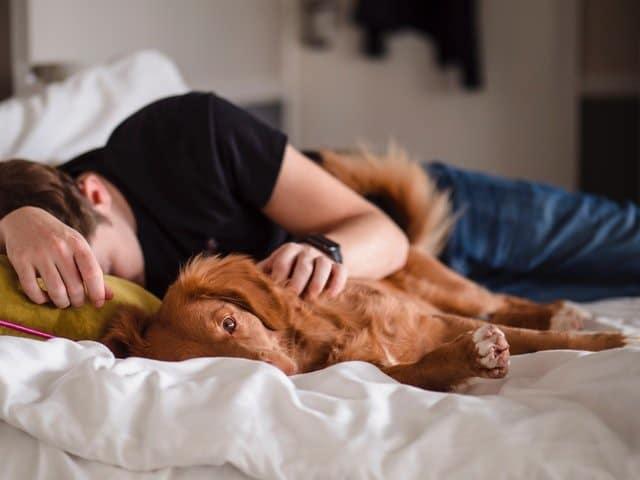 uitslapen met je hond
