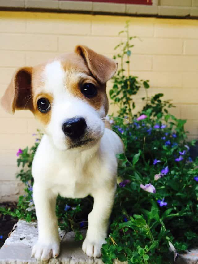Zindelijkheidstraining puppy