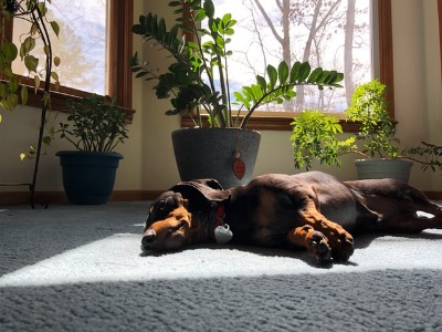 hond met kamerplanten
