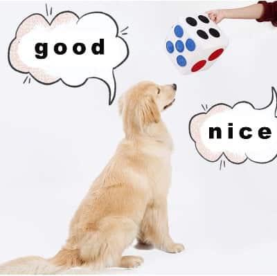 Kubus, Intelligentie Speelgoed voor honden.