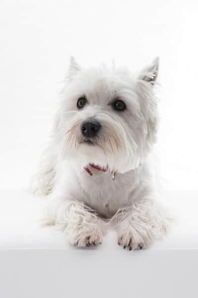 10 Honden en hun Beroemde Baasjes