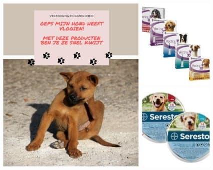 beste vlooien producten voor honden