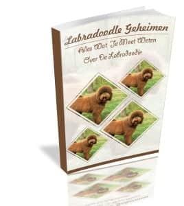 Labradoodle-geheimen-e-book