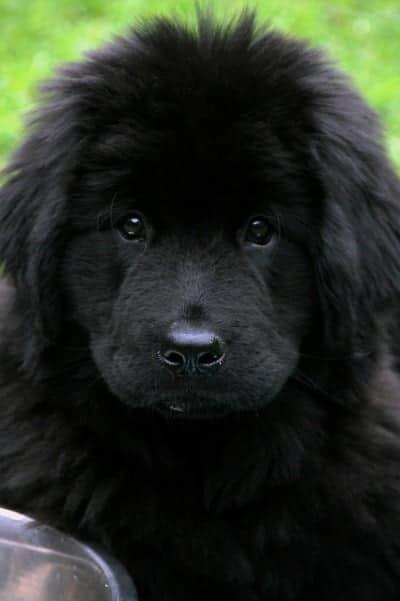 Puppy Socialisatie Lijst