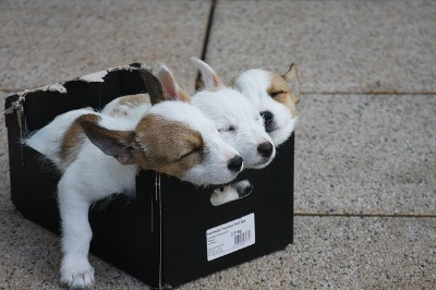 Slapende pups