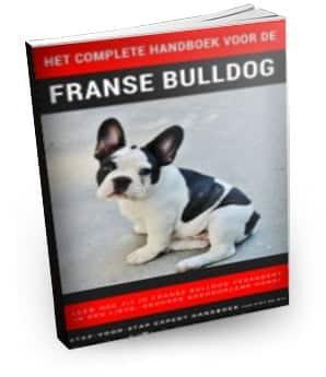 Handboek-voor-de-Franse-bulldog