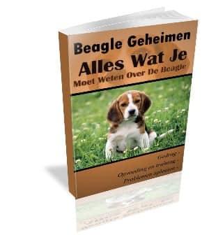 e-book beagle geheimen