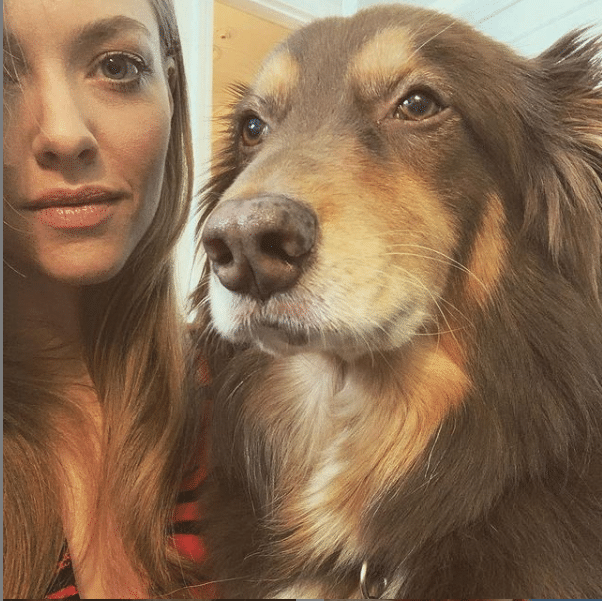 Finn de Australische herder van beroemdheid Amanda Seyfried
