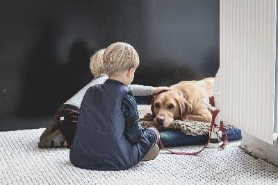 atrose bij honden, hond ligt op zijn hondenkussen en kindjes aaien hem