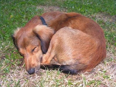hond draait rondjes voor slapen