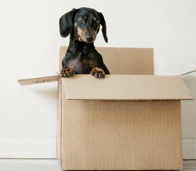cadeaubox voor hond
