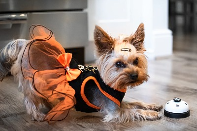 hond-maakt-buiging