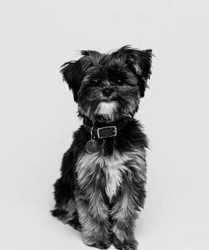 zittend boomer hondje