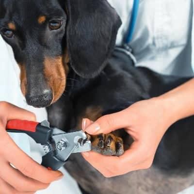 nagels knippen bij hond